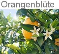 zur Orangenblüte ins Tal der orangen